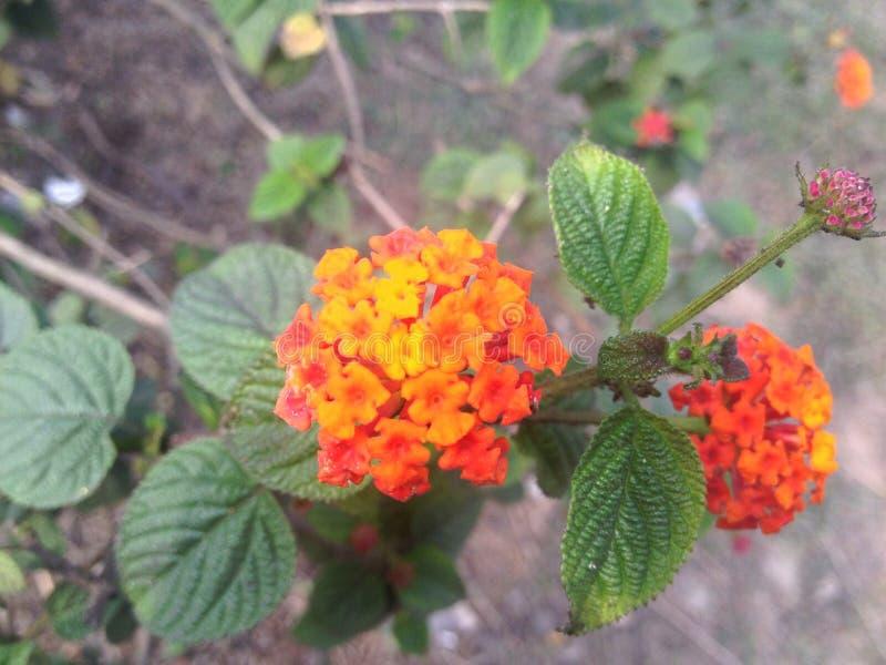 Die herrlichen orange Blumen stockbild