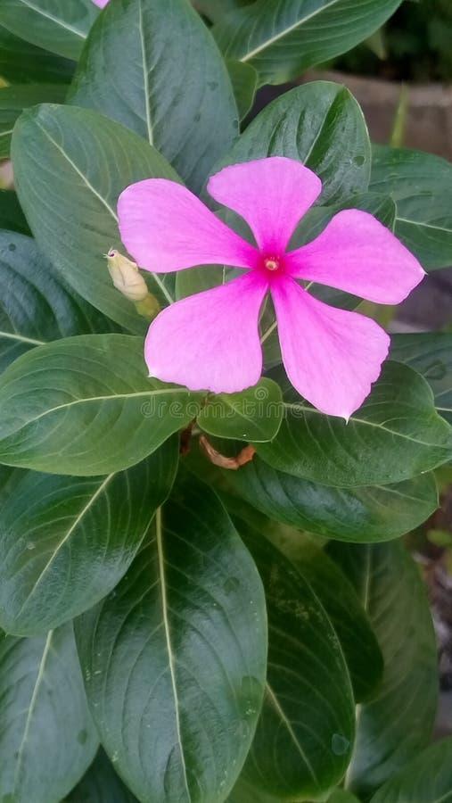 Die Hobbys der Blume stockfotos