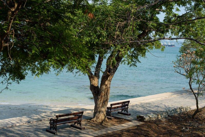 Die Holzbanken unter dem großen Baum an der Küste lizenzfreies stockfoto