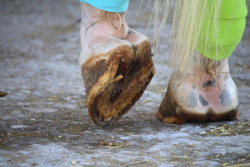 Die Hufe des Pferds und der Verbände auf den Hinterbeinen lizenzfreie stockbilder