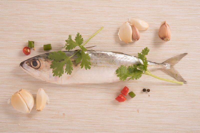 Die indischen Makrelenfische, die mit Koriander geschmückt werden, treiben, Knoblauch und Scheibe des roten und grünen Paprikapfe stockbilder