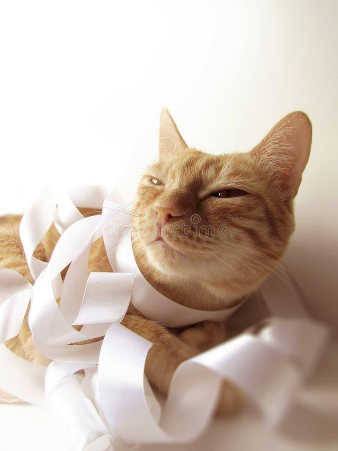 Die Ingwerkatze lächelt im Sonnenlicht und wird in einem breiten milchigen Pastellfarbsatin mit einem Band eingewickelt lizenzfreies stockfoto