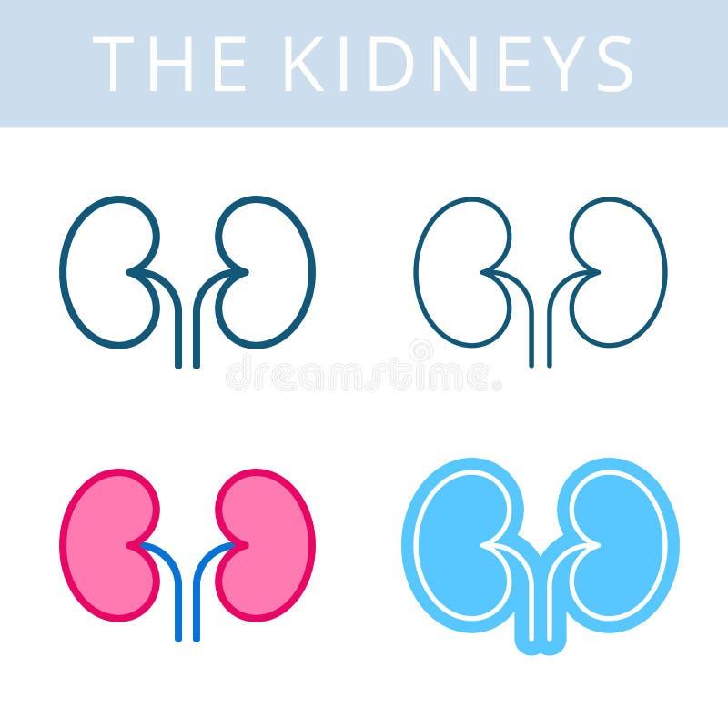 Die internals Ikonen Nieren und urogenitales Systemvektor outlin lizenzfreie abbildung
