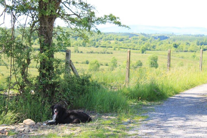 Die irische Landschaft stockbilder