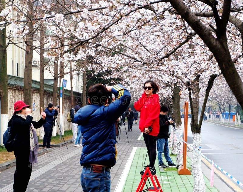 Die Jahreszeit von Kirschblüte lizenzfreies stockbild