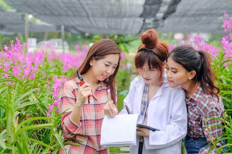 Die jungen Frauen der Forscher, die weiße Kleider und Orchideengarteninhaber tragen, arbeiten zusammen, um Orchideen zu kontrolli lizenzfreie stockbilder