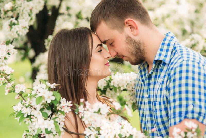 Die jungen Paare, die im Frühjahr BlütenApfelbäume küssen, parken lizenzfreie stockfotos