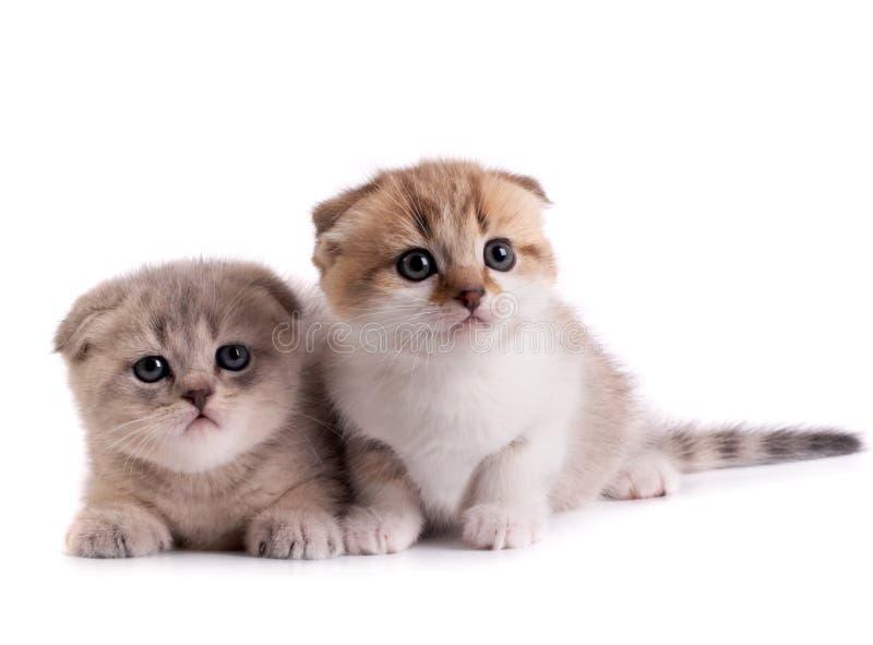 Die Kätzchen stockfotografie