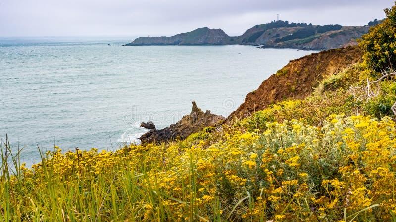Die Küstenlinie des Pazifischen Ozeans in Marin Headlands an einem nebeligen Tag; Goldene Yarrow Eriophyllum-confertiflorum Wildf lizenzfreie stockfotos