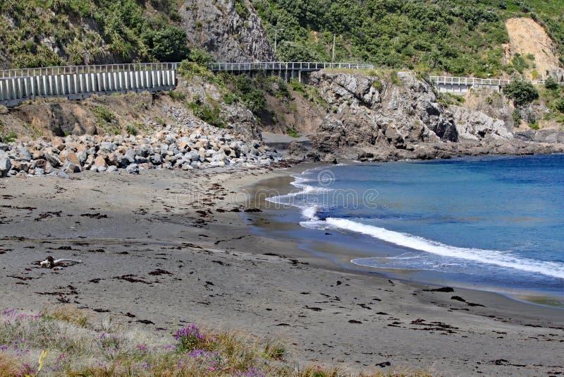 Die Küstenstraße überschreitet durch eine ruhige Bucht mit den Wellen, die leicht sich an zum Strand nahe Wellington, Neuseeland  lizenzfreies stockfoto