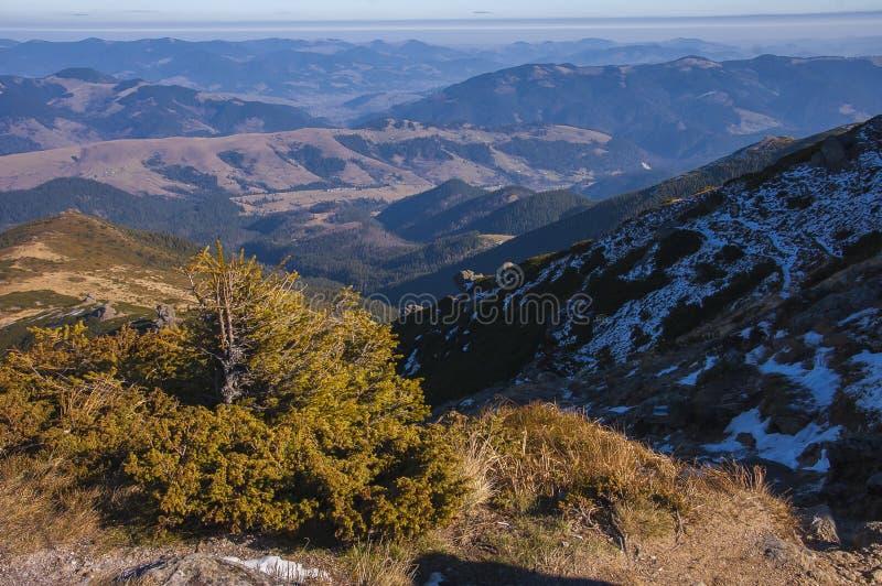 Die Karpaten im Vorfrühling stockfotos