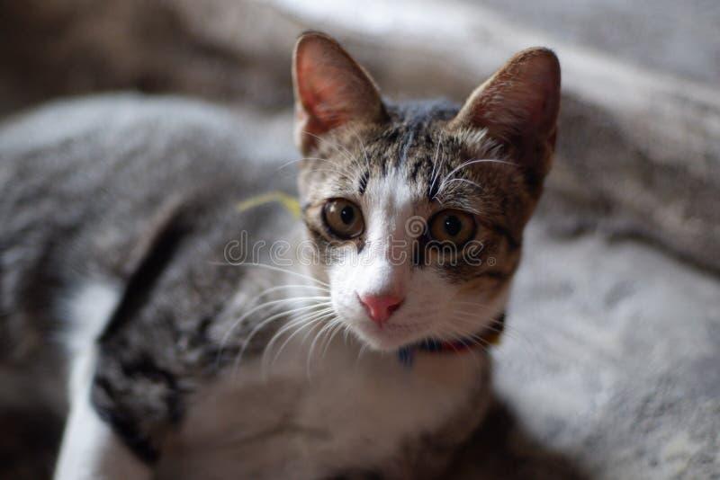 Die Katze 1 stockbild