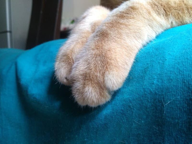 Die Katze, die auf einem Stuhl stillsteht lizenzfreie stockfotografie