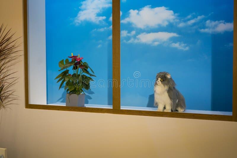 Die Katze am Bildschirmbereich für das Machen von Fotos bei Sony Expo 2019 lizenzfreie stockbilder