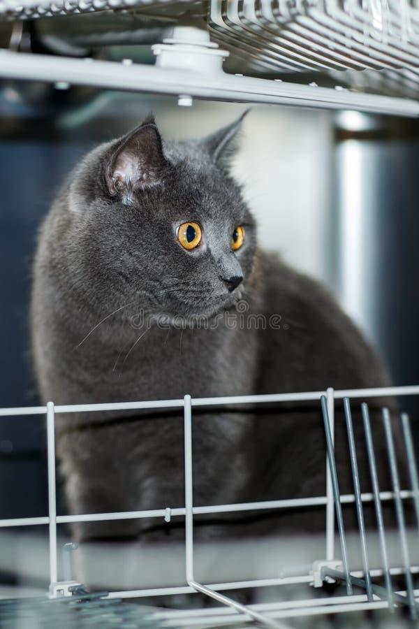Die Katze in der Spülmaschine lizenzfreie stockfotografie
