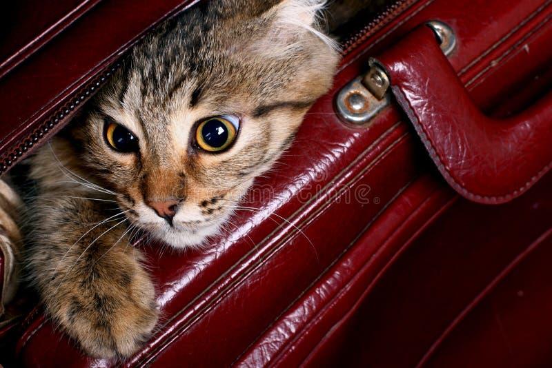 Die Katze, die aus einem Beutel heraus schaut stockbild