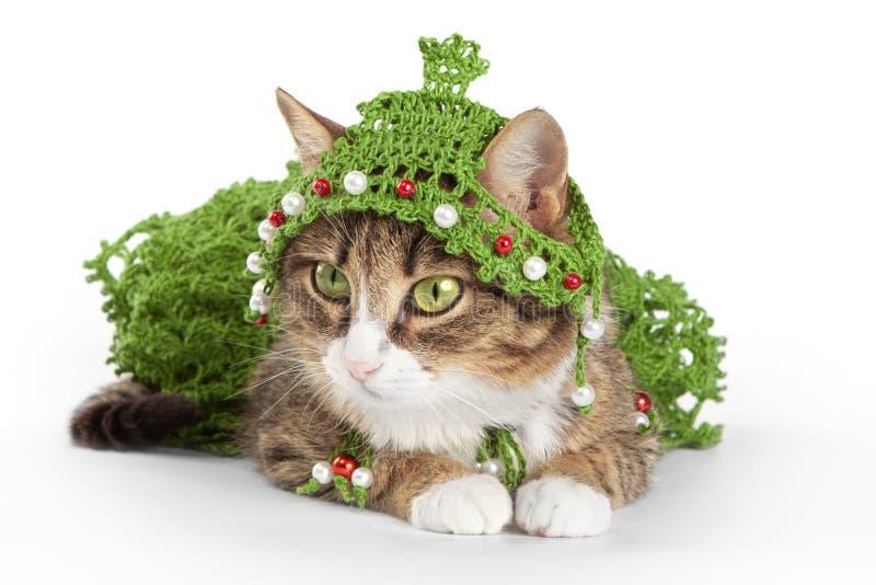 Die Katze, die einen Weihnachtsbaum trägt, ist auf Weiß lizenzfreies stockbild