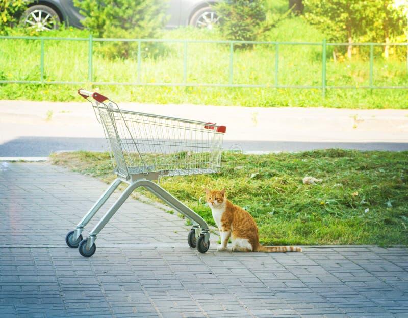 Die Katze ging im Katzenfutterspeicher, sitzt am leeren Lebensmittelgeschäftwarenkorb stockbilder