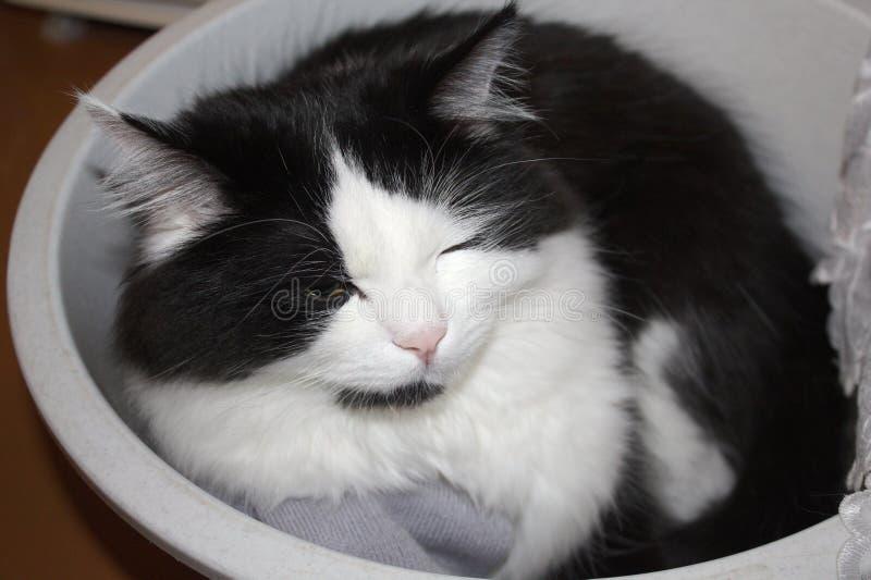 Die Katze im Behälter stockfotografie