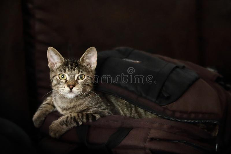 Die Katze ist aus der Tasche heraus stockbilder