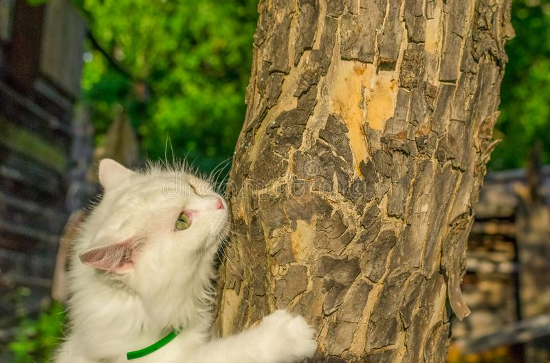 Die Katze kriecht auf einen Baum lizenzfreies stockfoto