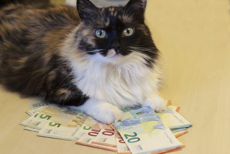 Die Katze liegt auf Banknoten von 5, 10, 20 Euros stockfoto
