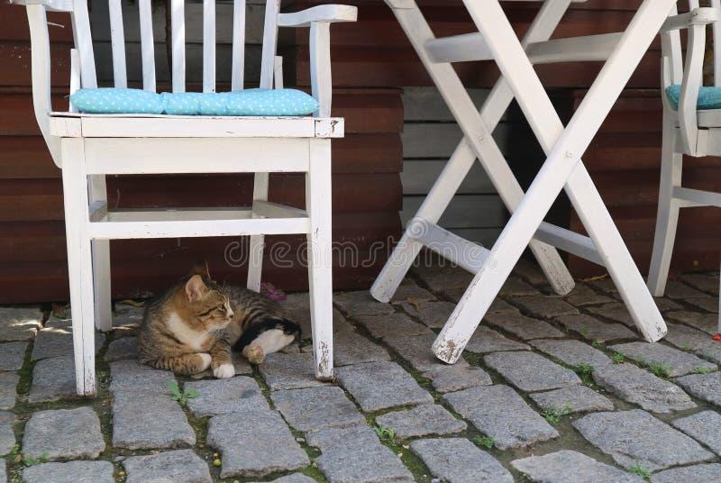 Die Katze liegt unter dem weißen Stuhl lizenzfreie stockbilder