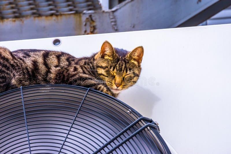 Die Katze schl?ft lizenzfreie stockbilder