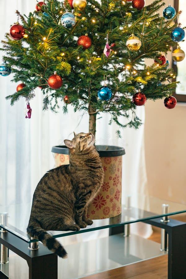 bengal katze unter weihnachtsbaum stockfoto bild von. Black Bedroom Furniture Sets. Home Design Ideas