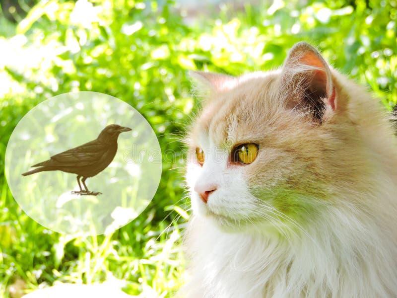 Die Katze, vermutlich denkend an Nahrung, mit denken Wolke gegen einen gr?nen Hintergrund Tr?umen der Katze stockfoto