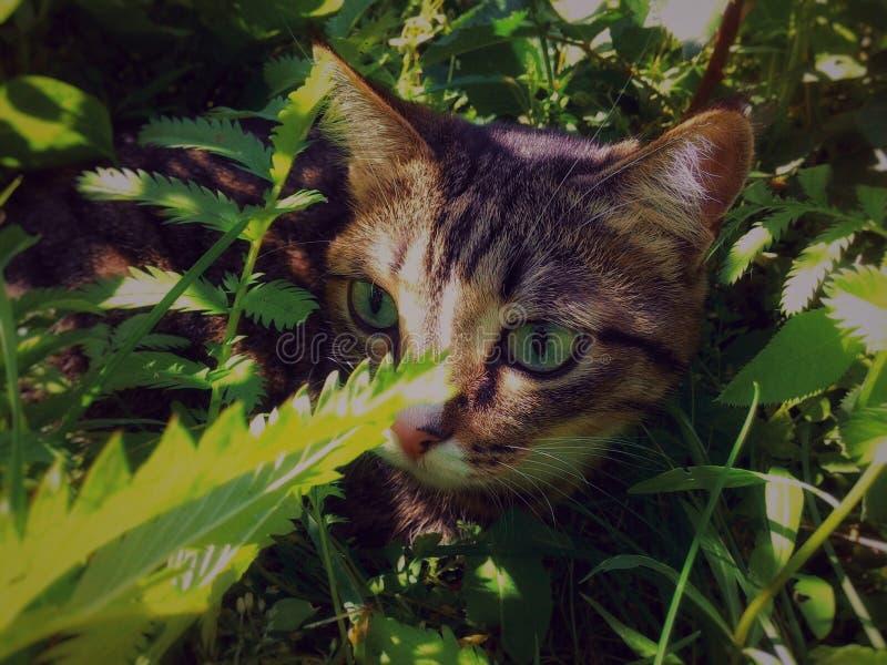 Die Katze versteckt sich in den Büschen lizenzfreie stockfotografie