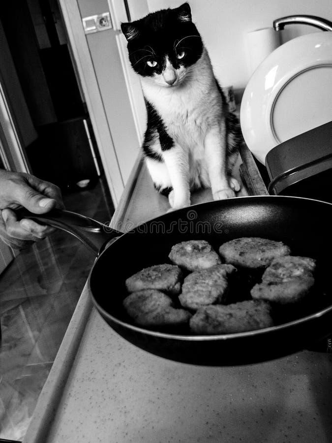 Die Katze wartet auf die gebraten zu werden Nuggets, stockfotografie