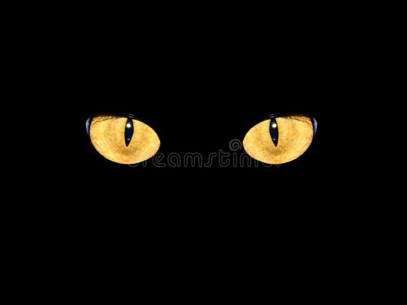 Die Katzenaugen in der Dunkelheit lizenzfreies stockfoto