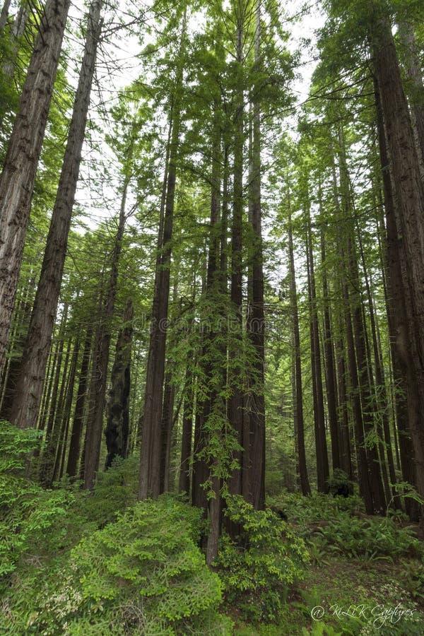 Die klarste Weise in das Universum ist durch eine Waldwildnis | John Muir stockfotografie