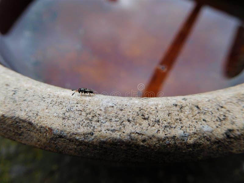 Die kleine Fliege und ein flaches Pool, die uns Himmel und Sonne zeigen lizenzfreies stockfoto