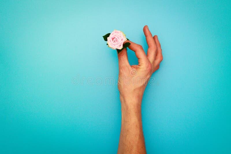 Die kleine Rosarose des Mannhandgriffs, Ansicht von oben stockfotografie
