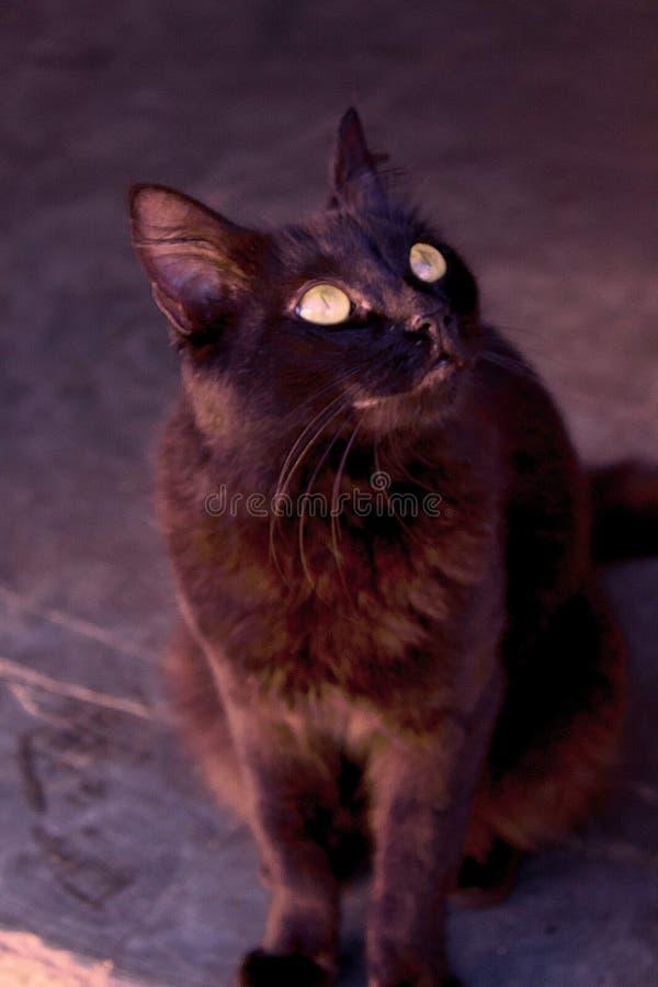 Die kleine schwarze Katze stockfotografie