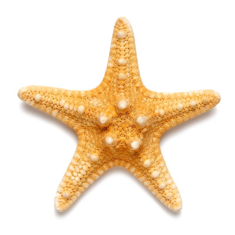 Die kleinen Starfish färben Farbe lokalisiert auf weißem Hintergrund gelb stockfotos