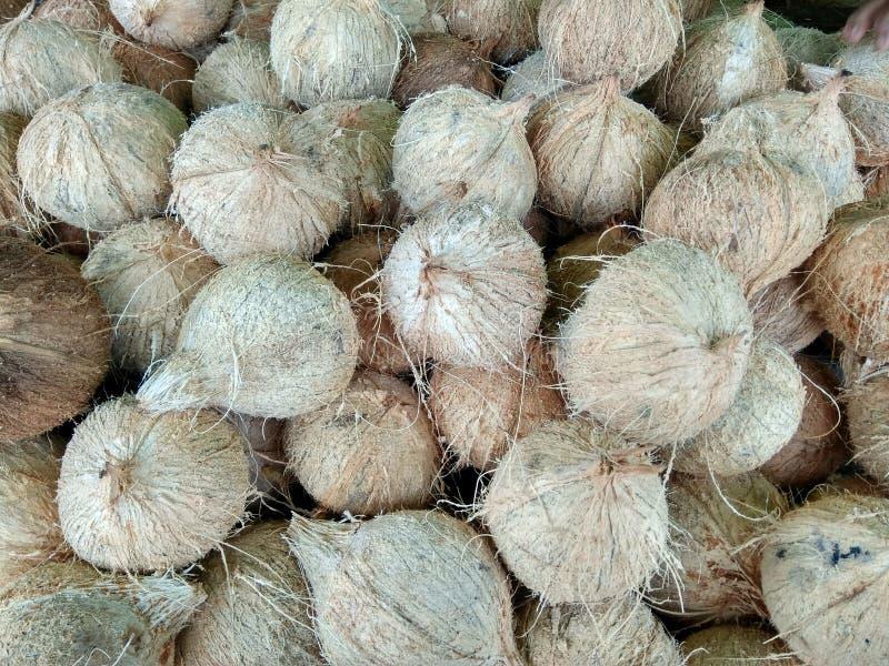 Die Kokosnussfrüchte stockfotografie