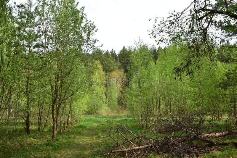 Die Kombination von Koniferen- und von Laubwäldern beeindruckt mit Schönheit und Herrlichkeit stockfoto