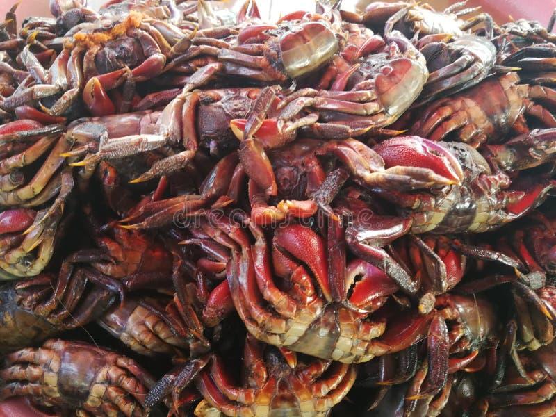 Die konservierte Krabbe lizenzfreie stockfotos