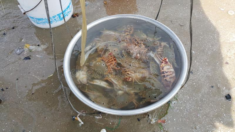 Die Krabben im Messing lizenzfreies stockfoto