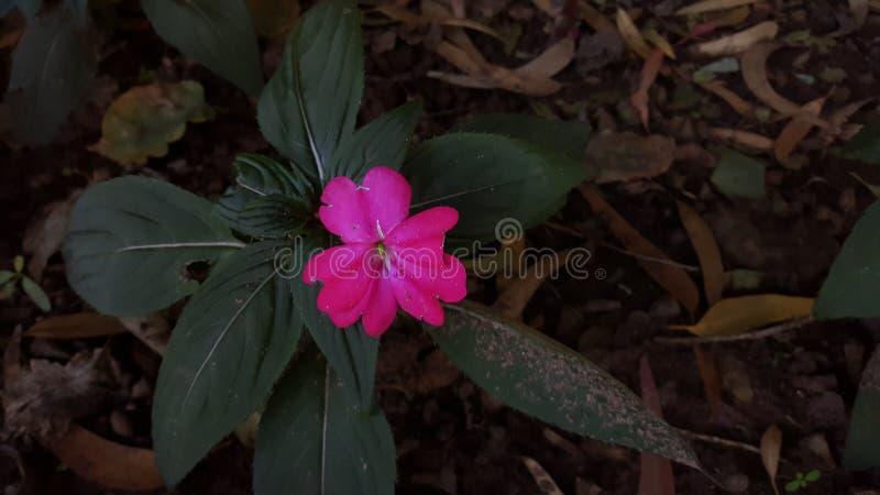 Die kranke Blume lizenzfreie stockbilder