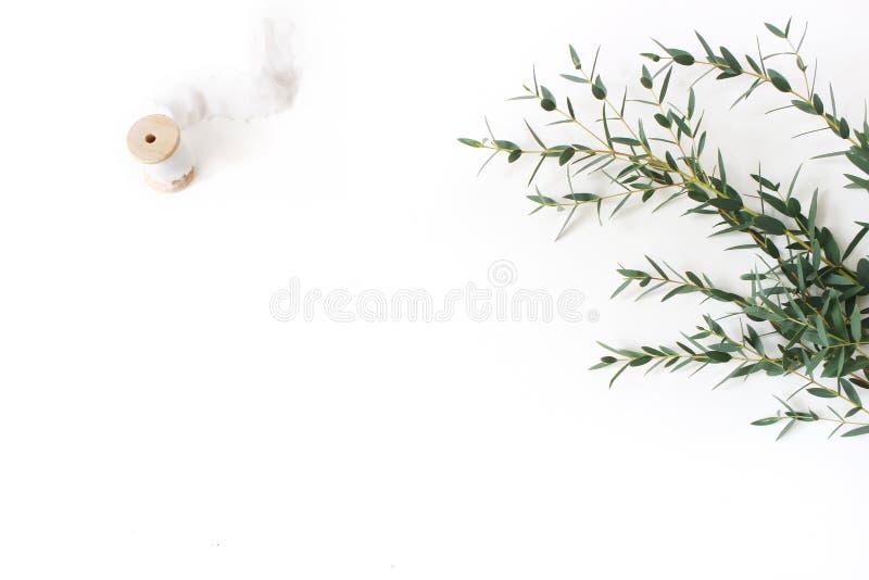 Die kreative Zusammensetzung, die von grünem Eukalyptus parvifolia gemacht wird, verzweigt sich, Seidenband und hölzerne Spule au lizenzfreie stockfotografie