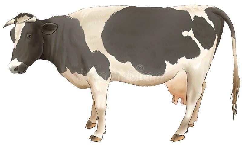 Die Kuhkosten und -blicke. lizenzfreie abbildung