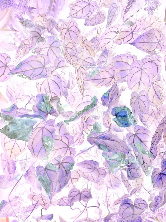 Die Kunst von Blütenschweif crystallinum negativen Blättern stockfoto