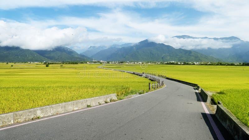 Die ländliche Landschaft mit goldenem Bauernhof des ungeschälten Reises bei Luye, Taitung, Taiwan lizenzfreies stockfoto