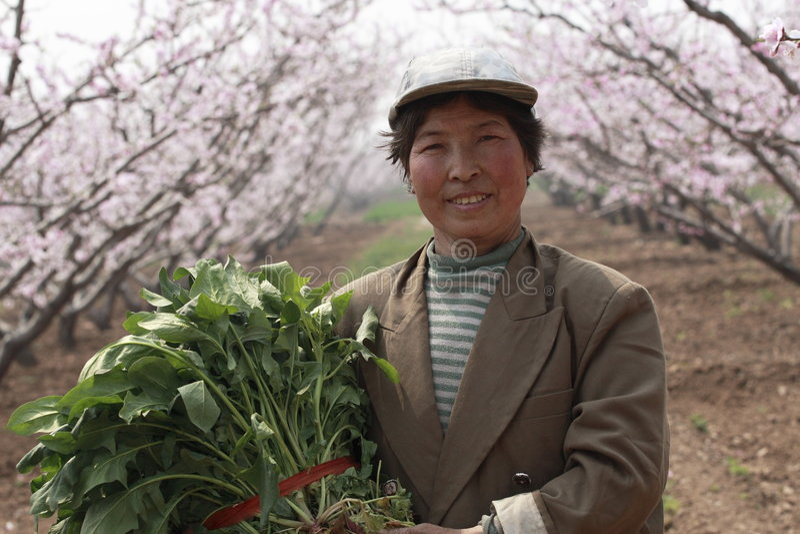 Die Landarbeiter von China. lizenzfreie stockfotos