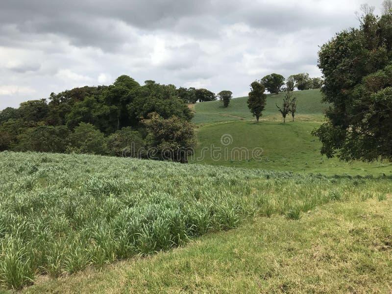Die Landschaft stockbild