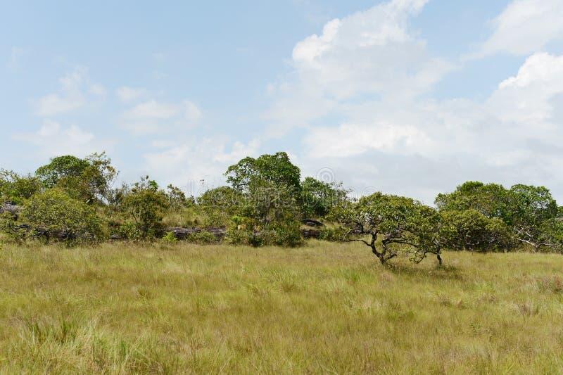 Die Landschaft in der Abteilung des Meta- stockfotos